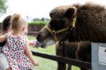 A Trip To The Kildare Farm